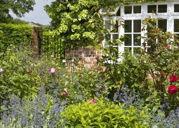 Cottage Garden Colour